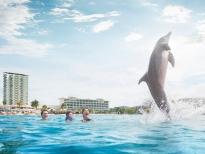 900x600_jamaica_dolphin